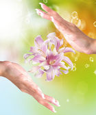 Beautiful Female Hands with Flowers Pink Exotic Lily on abstract summer nature — Stock Photo