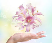 Flowers Pink Lily on a female hand.Spa Salon — Stock Photo