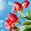 Stock Photo: Bouquet beautiful red tulip on blue sky background