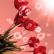 Stock Photo: Bouquet beautiful red tulip.Spring Nature