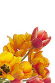 Bouquet Beautiful Garden Tulip — Stock Photo