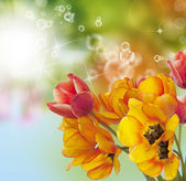 Bouquet Tulips on abstract Spring nature background.Easter — Stock Photo