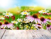 Flower Card.Summer Nature background — Stock fotografie