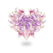 Heart Flower.Love concept.Beautiful Abstract Bouquet pink Lily — Stock Photo