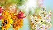 Beautiful flower card.Nature — Stock Photo