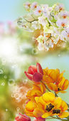 Beautiful flower card — Stock Photo
