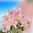 Japanese Floral background.Lily — Stock Photo #47258455