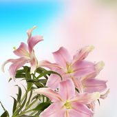 Lily.japanese 花の背景 — ストック写真