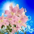 Lily.Flower beautiful card — Stock Photo #47277607