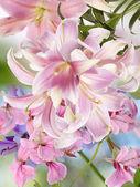 Nature.Flower — Stock Photo