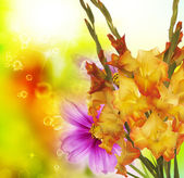 Beautiful floral background.Gladiolus — Stockfoto