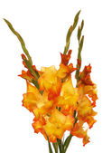 Beautiful Bouquet Flower Gladiolus on white — Stock Photo