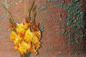 Beautiful Bouquet Gladiolus in old texture — Stock Photo