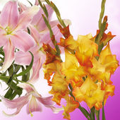 Beautiful floral background.Gladiolus — Stock fotografie