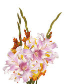 Beautiful bouquet Gladiolas — Stock Photo