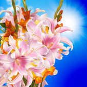 Gladiolus.Bouquet — Stock Photo