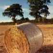 Hay bales on the field after harvest, uk — Stock Photo