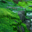 Seaweed covering rocks at the seaside — Stock Photo #48766017