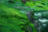 Seaweed covering rocks at the seaside — Foto Stock