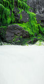 Seaweed growing on the rocks at the beach — Stok fotoğraf