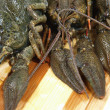 Stock Photo: Raw crawfishes on wooden board.