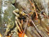 Crawfishes crus crus. — Foto Stock