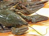 未经烹煮的对虾. — 图库照片