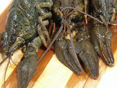Raw crawfishes on a wooden board. — Stock Photo