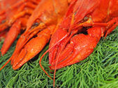 Red boiled crawfishes on a green dill. — Stock Photo