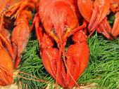 Rode gekookte crawfishes en groene dille op een bord woden. — Stockfoto