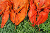 Red boiled crawfishes and green dill. — Stock Photo
