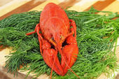 Red boiled crawfish and green fennell. — Stock Photo