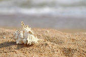 Seashell on a sandy beach. — Stock Photo