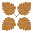 Stock Photo: Four autumn leaf kaleidoskope.Isolated.