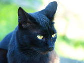 Black cat with green eyes. — Stock Photo