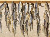 夏のビーチでの販売のための乾燥の魚. — ストック写真