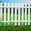 White fence on green grass with flowers. — Foto de Stock