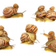 Set of snails.Isolated. — Stock Photo