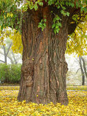 Picturesque old tree trunk. — Stock Photo