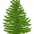 HIghly detailed fir tree isolated on white background. - Image vectorielle