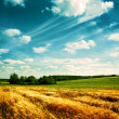 Summer Landscape with Wheat Field and Clouds - Stok fotoğraf