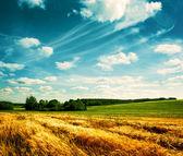 Paisagem de verão com o campo de trigo e nuvens — Foto Stock