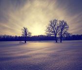 Winter Landscape with Snowy Field and Trees — Stock fotografie