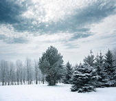 Winter Landscape with Snowy Park — Foto de Stock