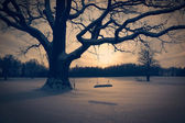 Winter Landscape with Abandoned Tree Swing — Stock Photo
