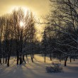 Winter Landscape with Snowy Trees — Stok fotoğraf
