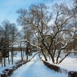 Winter Landscape with Alley in Snowy Park — Stok fotoğraf