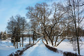 Winter Landscape with Alley in Snowy Park — Photo