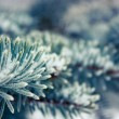 Frosty Branch with Snow in Winter — Stok fotoğraf