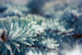 Frosty Branch with Snow in Winter — Stockfoto